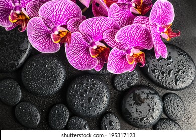 Beautiful spa concept of blooming twig of stripped violet orchid (phalaenopsis ) on zen stones with drops