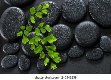beautiful spa concept of green twig Adiantum fern on zen basalt stones with dew