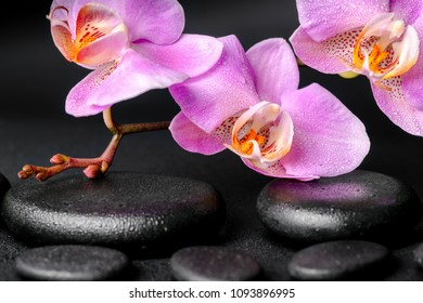 Beautiful spa concept of zen massaging stones with drops, lilac orchid (phalaenopsis) and green leaf on black background, close up