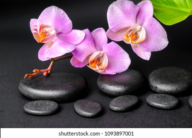 Beautiful spa setting of zen massaging stones with drops, lilac orchid (phalaenopsis) and green leaf, close up