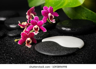 Beautiful spa setting of zen and sign Yin-Yang stones with drops, red orchid (phalaenopsis) and green leaf