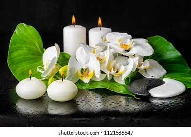 beautiful spa still life of blooming white orchid flower, phalaenopsis, green leaf with dew, candles and sign Yin Yang stones on black