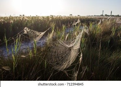 Beautiful spider web in dew gleams in the sunlight on the grass
