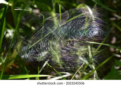 a beautiful spider web over the grass shimmers with different colors in the rays of the sun