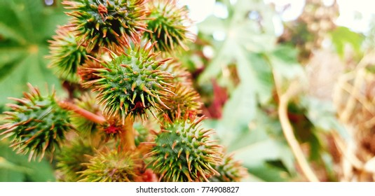 beautiful spiny plants. Wallpaper. Natural life