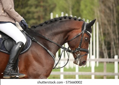 Beautiful sport horse portrait in horse show