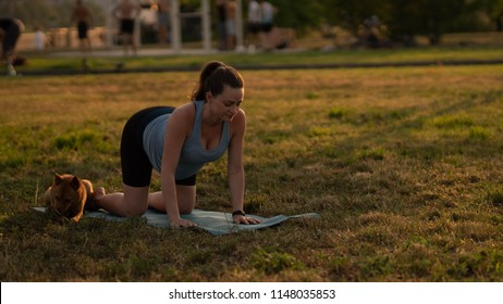 Beautiful sporty fit yogini Pregnant woman practices yoga asana bitilasana - cow pose gentle warm up for spine (also called cat-cow pose) in in a park with a dog