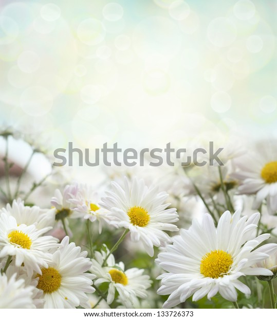 Beautiful spring background  with flowers