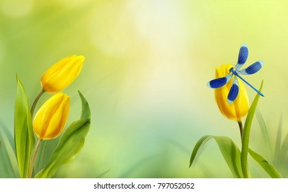 Beautiful spring background of light green color with flowers of yellow tulips and blue dragonfly in sunshine close-up. Concept of spring and the awakening of nature, there is free space for text.