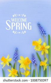 Beautiful Spring banner with fresh dafodil and muscari flowers against light blue wooden background. With HELLO SPRING message