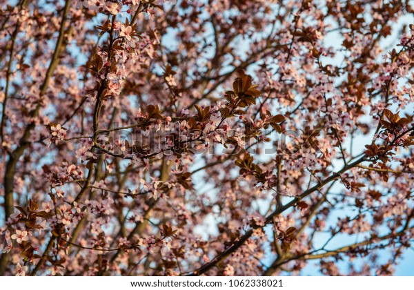Beautiful spring blossom
