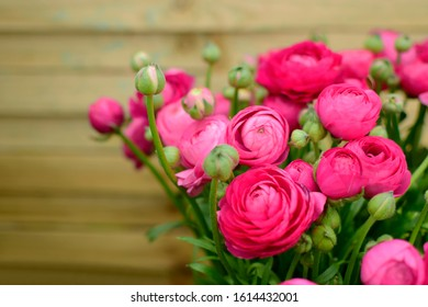Beautiful spring blossom of pink ranunculus flowers with green leaves over blurred wooden background. Nature concept.