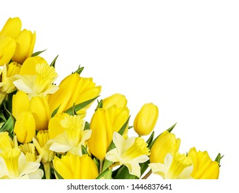 Beautiful spring bouquet of yellow tulips and daffodils, arranged as a vignette, isolated on a white background