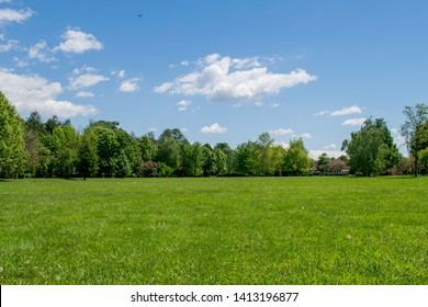 a beautiful spring decoration. Green grass, birds on the blue sky