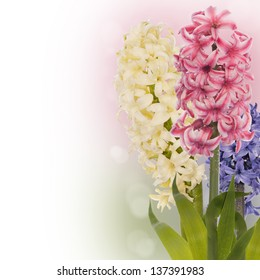 Beautiful spring exotic flower.Celebration card