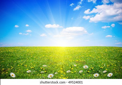 Beautiful spring field with flowers in sunlight