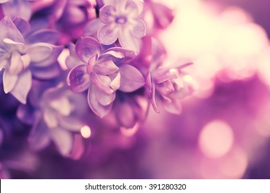 beautiful spring flower. natural background