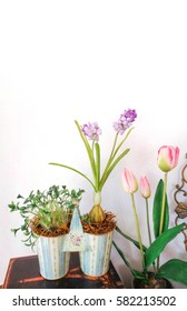 Beautiful spring flower tulips in a pot for interior