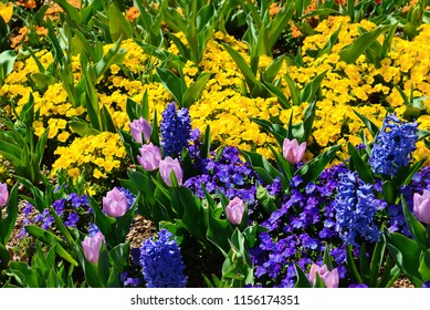 Beautiful spring flowers bloom in a home garden.