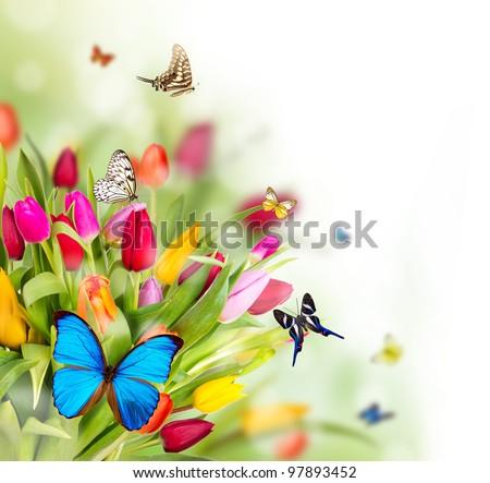 Beautiful Spring Flowers Butterflies Stockfoto Jetzt Bearbeiten