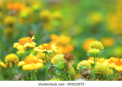 beautiful spring flowers in garden nature background.