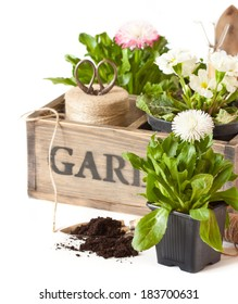 Beautiful spring flowers and gardening tools on a white background.