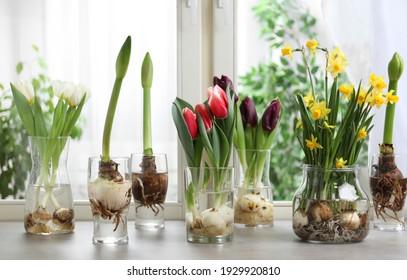 Beautiful spring flowers in glassware on grey window sill