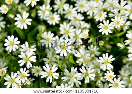 Beautiful Spring Flowers Screensaver Stock Photo Edit Now