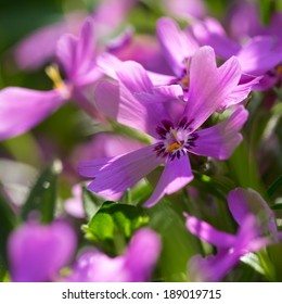 Beautiful spring flowers,floral background,macro photography - Shutterstock ID 189019715