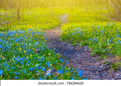beautiful spring forest glade in a flowers