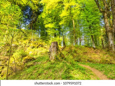 Beautiful spring forest landscape with in area of mill stone and ice caves and beech trees in volcanic Eifel at Roth, Gerolstein Germany