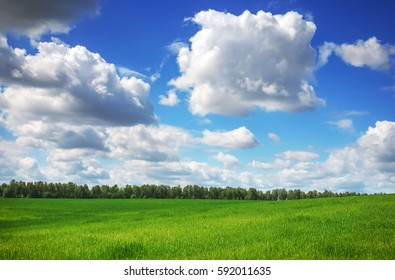 Beautiful spring landscape. Field of grass and perfect sky
