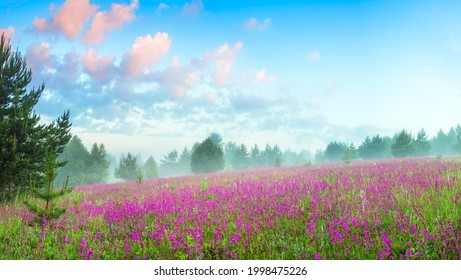 beautiful spring landscape with flowering pink flowers on meadow and forest at sunrise. amazing scenery with blossoming purple wildflowers and blue sky