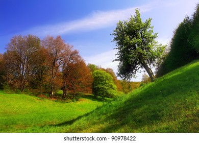 A beautiful spring landscape with green grass and trees and blue sky
