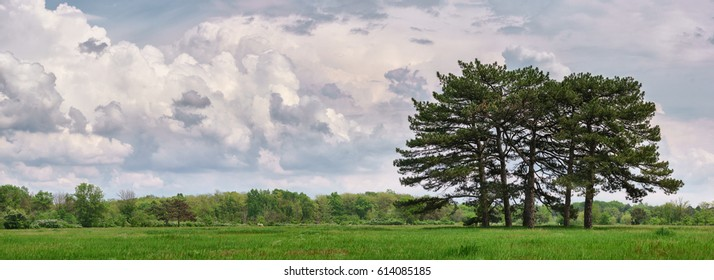 Beautiful spring landscape with meadow green grass, fir trees and clouds.