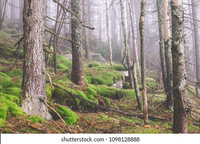 Beautiful spring landscape in mountains Karpaty in the forest.