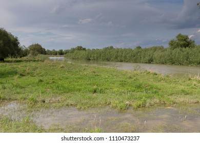 Beautiful spring landscape. Overflooded flood plain willow forest in spring.
