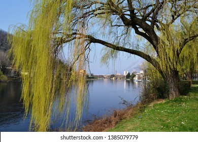 Beautiful spring landscape of the river Adda descent green meadow riverbank with big willow tree green branches, blue water river flow, blue sunny sky and view to a distant Lecco centre.