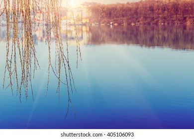 beautiful spring landscape. Willow rounders in the glow of the sunset over the lake. beauty in the world. color in nature