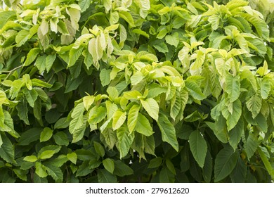 Beautiful spring leaves, close up