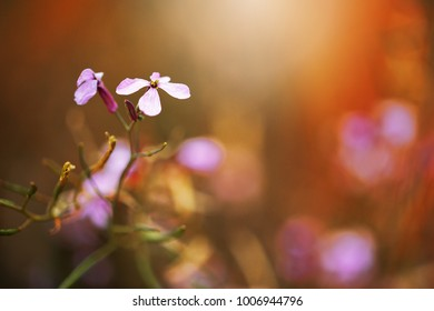 beautiful spring lilac flower on dark colorful background in nature in field. Nature outdoor photo in fresh morning