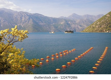 Beautiful spring Mediterranean landscape. View of mussel farm . Montenegro, Adriatic Sea, Bay of Kotor