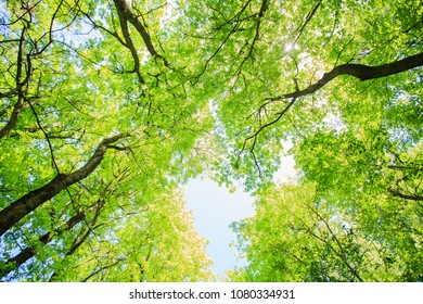 Beautiful spring nature background, green forest and blue sky