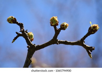 Beautiful spring. New green leaves on the tree begin to grow.