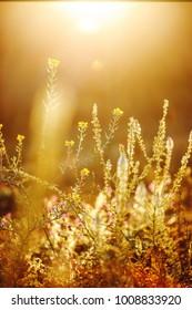 Beautiful spring plants in a field.