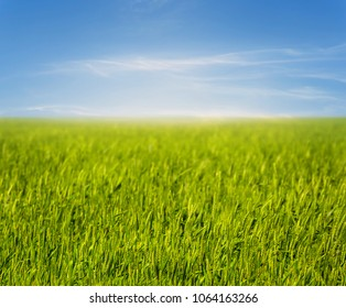 beautiful spring rural field, natural background