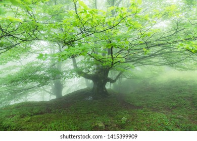 beautiful spring scene at misty forest