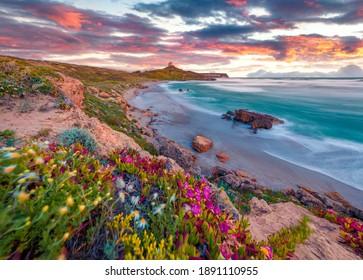 Beautiful spring scenery. Colorful morning scene of Sardinia, Italy, Europe. Fantastic sunrise on Capo San Marco Lighthouse on Del Sinis peninsula. Picturesque seascape of Mediterranean sea. - Shutterstock ID 1891110955