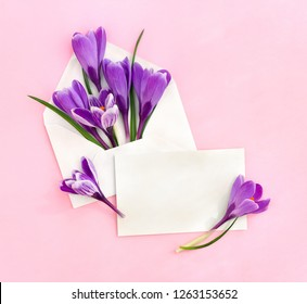Beautiful spring snowdrops flowers violet crocuses in postal envelope and blank sheet with space for text on a pink paper background. Top view, flat lay