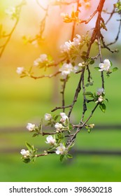 Beautiful spring soft flowers on blossoming tree